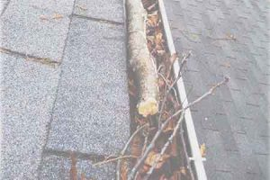 gutter cleaning havertown
